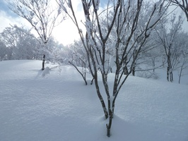 Perfect winter scenery in the upper slopes, with deep snow