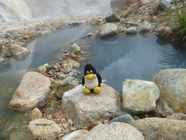 Tux was with us, as usual. He did prefer not to take a bath in this hot surroundings.