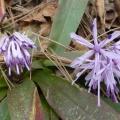 P1010341.JPG -- Early flowers