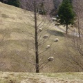 P1010490.JPG -- Sheep. Yes.