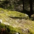 P1010762.JPG -- Moss on the surrounding rocks