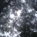 2013-08-25 074.JPG -- Mystic atmosphere