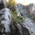 2013-10-14 037.JPG -- Another of these nasty pieces. First managable rock climbing (without protection), then vertical tree climbing - why on earth?