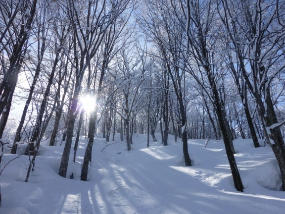 Leaving the forest road we enter into winter forest wonder land