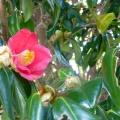 P1060289.JPG -- Vegetation