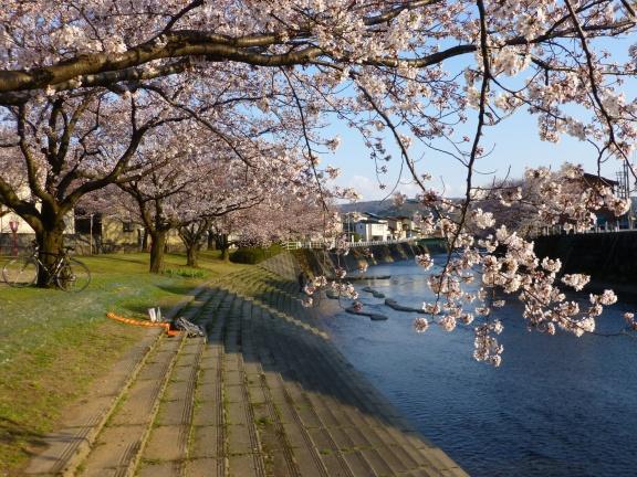 Peaceful neighborhood for Hanami