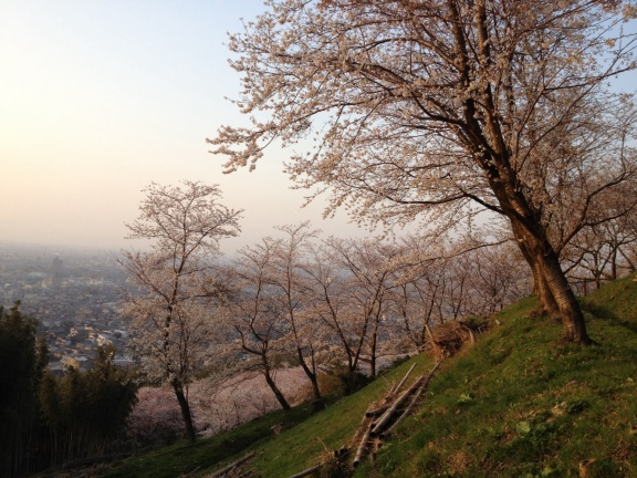 Sakura hill behind the Educational Center in Kanazawa