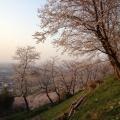 Photo 2014-04-08 17 40 21.jpg -- Sakura hill behind the Educational Center in Kanazawa