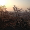 Photo 2014-04-08 17 41 18.jpg -- Evening sun through sakura