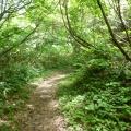 P1060557.JPG -- Along the ridge - still in deep forest