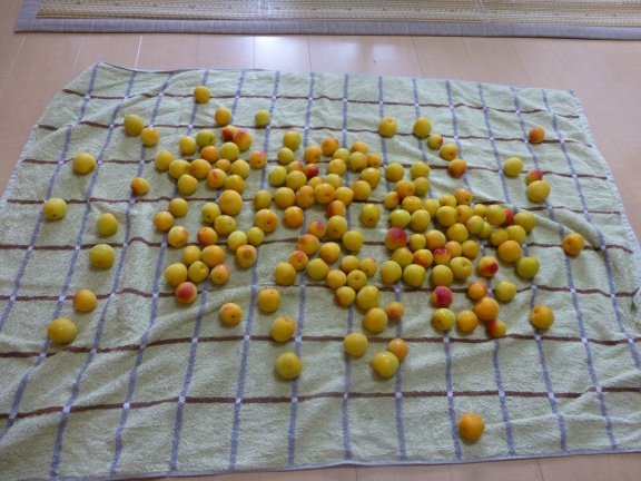 Washing and drying the plums