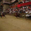 20080816_P_N_1605.JPG -- The dynamics of the Palio race - without saddle