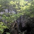 Photo 2014-07-20 15 45 19.jpg -- One of the climbing walls through the green
