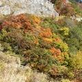 P1000523.JPG -- Autumn colors along the way
