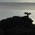 P1000609.JPG -- Morning dance at Miho-bay (Japan sea)
