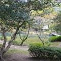 P1000636.JPG -- Pond on the compound of Izumotaisha