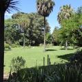 P1000908.JPG -- Melbourne Royal Botanical Gardens