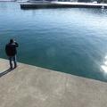 P1010042.JPG -- Fish spotting