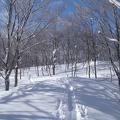 御世仏山 017.JPG -- Light forest leads to the top