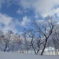 P1010698.JPG -- Blue sky, great powder