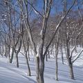 神奈山・前山 014.JPG -- Winter forest