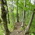 P1020387.JPG -- Back on the beech tree ridge