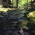 Photo 5-17-15, 1 11 42 PM.jpg -- Relaxing in the Kenmin-no-mori