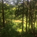 photo 6-13-15, 1 15 07 pm.jpg -- Surrounded by fresh green