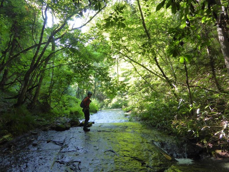 Start in the incredible green Souredani