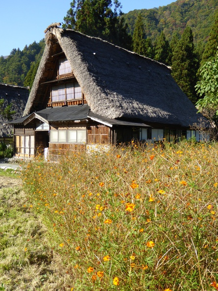 Flower meadows and a traditional house of Gokayama