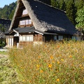 P1030277.JPG -- Flower meadows and a traditional house of Gokayama