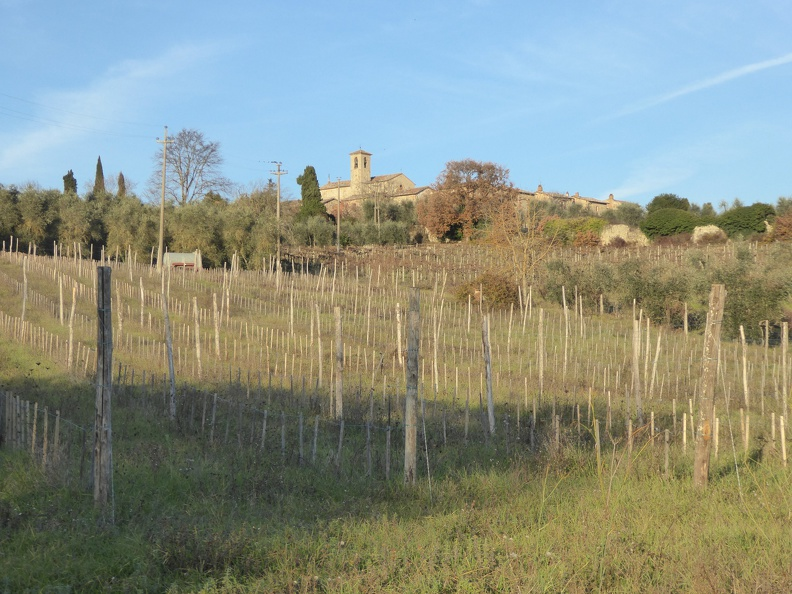 Wine yards near the Certosa