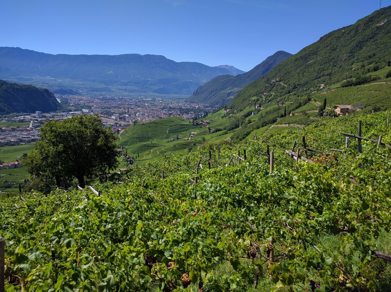 View from the hiking path over vinyards onto Bozen