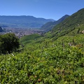 -- View from the hiking path over vinyards onto Bozen