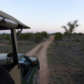 -- Evening game drive in the Kruger National Park