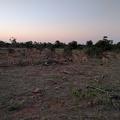 -- Impala in the Kruger National Park
