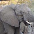 -- Elephant closing in