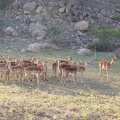 -- Morning game drive in the private deer park