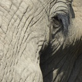 -- Close up of an elephant