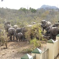 -- Elephants visiting the water hole next to our private lodge - one of the few places to get water during the draught