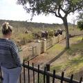 -- Enjoying elephants from close up