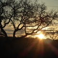 -- Evening game drive
