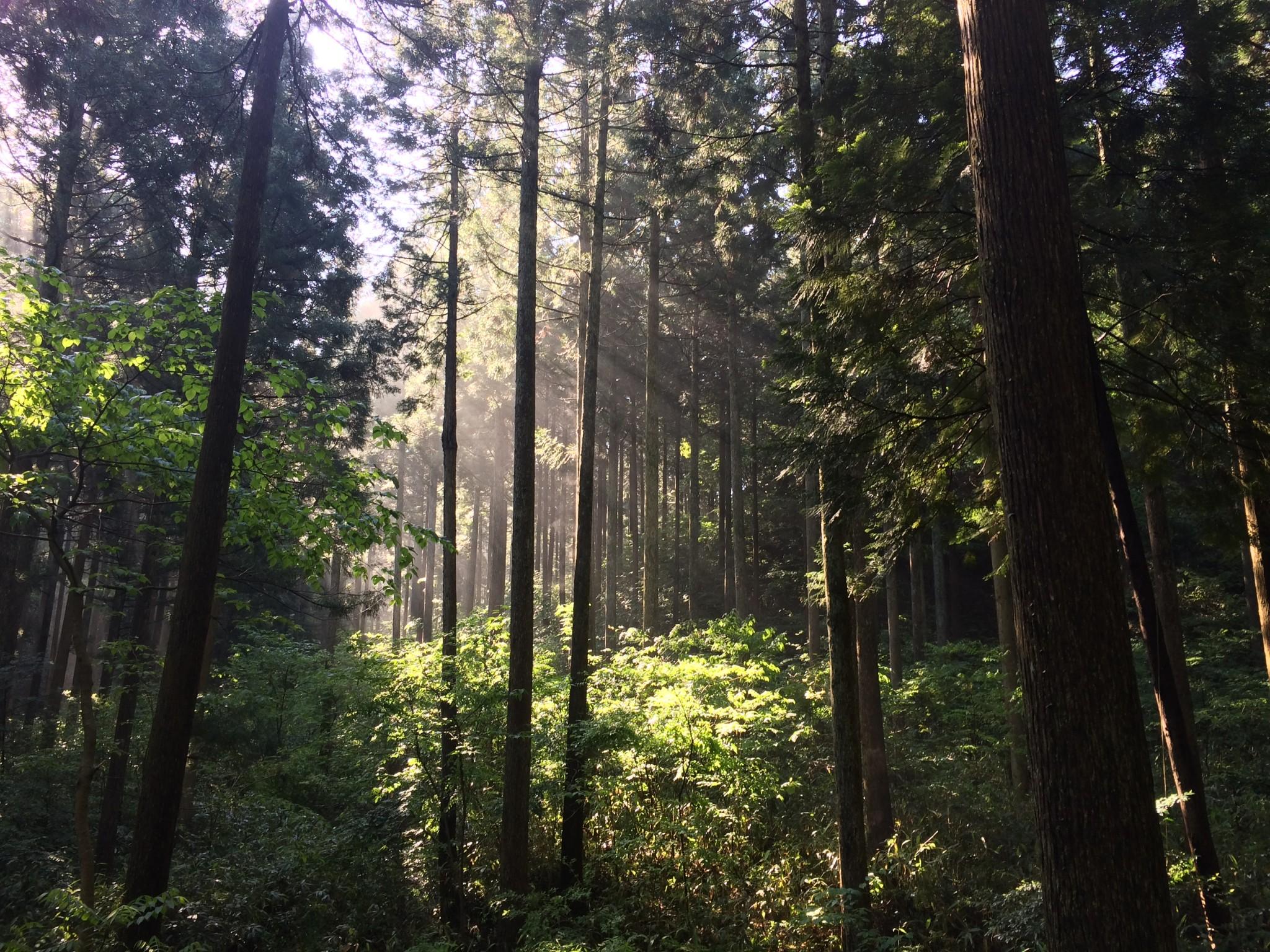 ハイキング 鞍掛山と県民の森